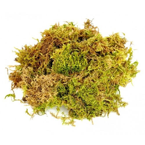 Moss Fibres - 50g pre pack