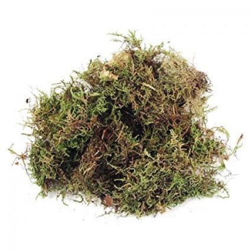 Moss Fibres