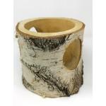 Silver Birch - Log Bowl