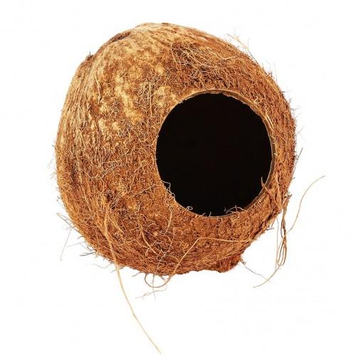 Coconut Hut